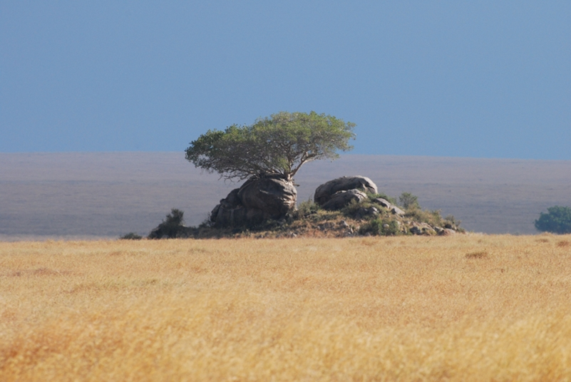 Serengeti National Park: savana e kopjes