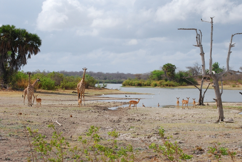 Lake Manze, Selous Game Reserve